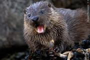 Otter Cub. Photo by Brydon Thomason.