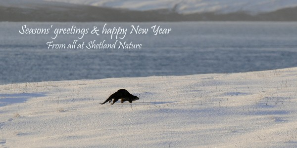 Seasons' greetings and happy New Year, From all at Shetland Nature
